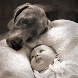 bebe e cachorro 3