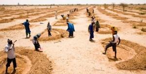 niger-cash-for-work-soil-71187-460