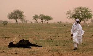 Niger-famine-006
