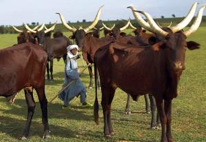 Niger Nomads Herdsmen, Tuareg and Peul