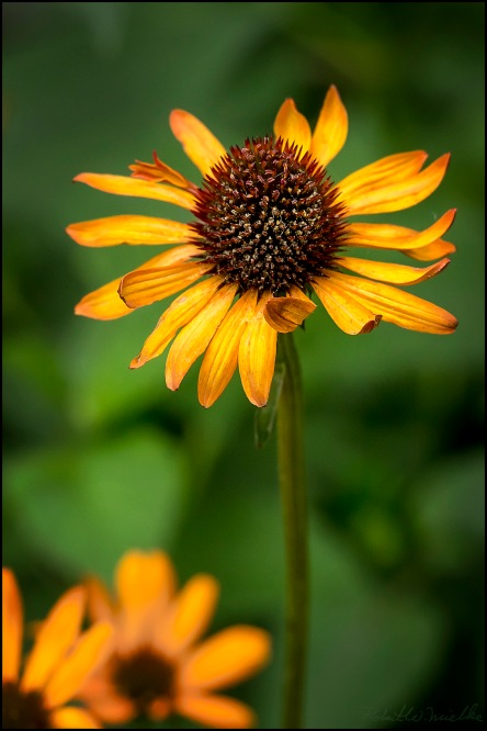 Flower 1912