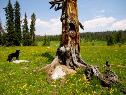 The Tree Abides
