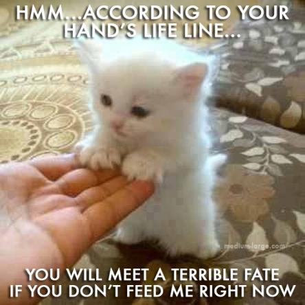 Kitten Psychic 2