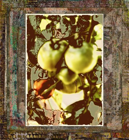 Tomatoes Green Imagination  MT
