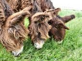 f4073-donkey1