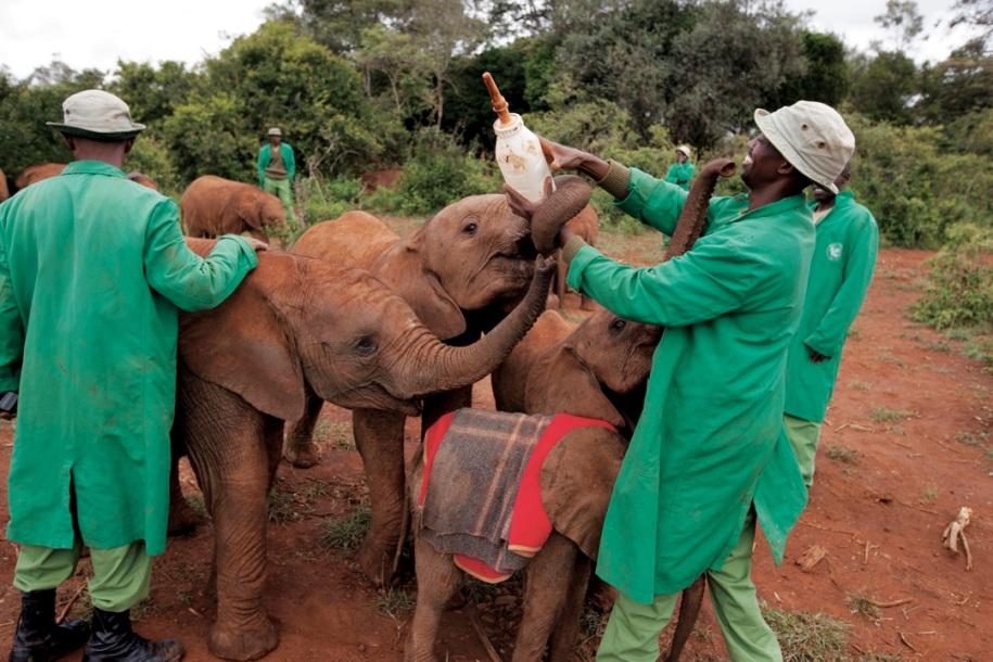https://vivimetaliun.files.wordpress.com/2016/06/6aa9b-elefantesenkenia.jpg?w=916&h=611