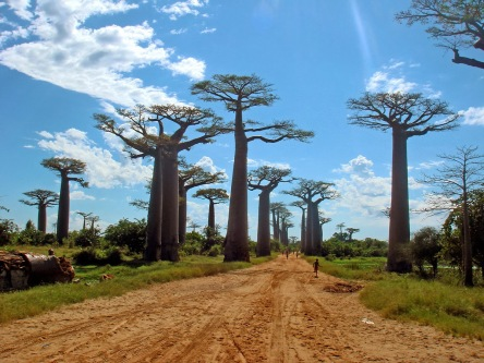 https://vivimetaliun.files.wordpress.com/2018/08/3c7ab-avenuebaobabs1.jpg